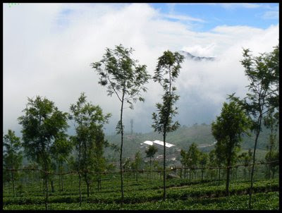 Hill station of ooty