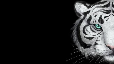 Image Result For Black And White Animals Wallpapera
