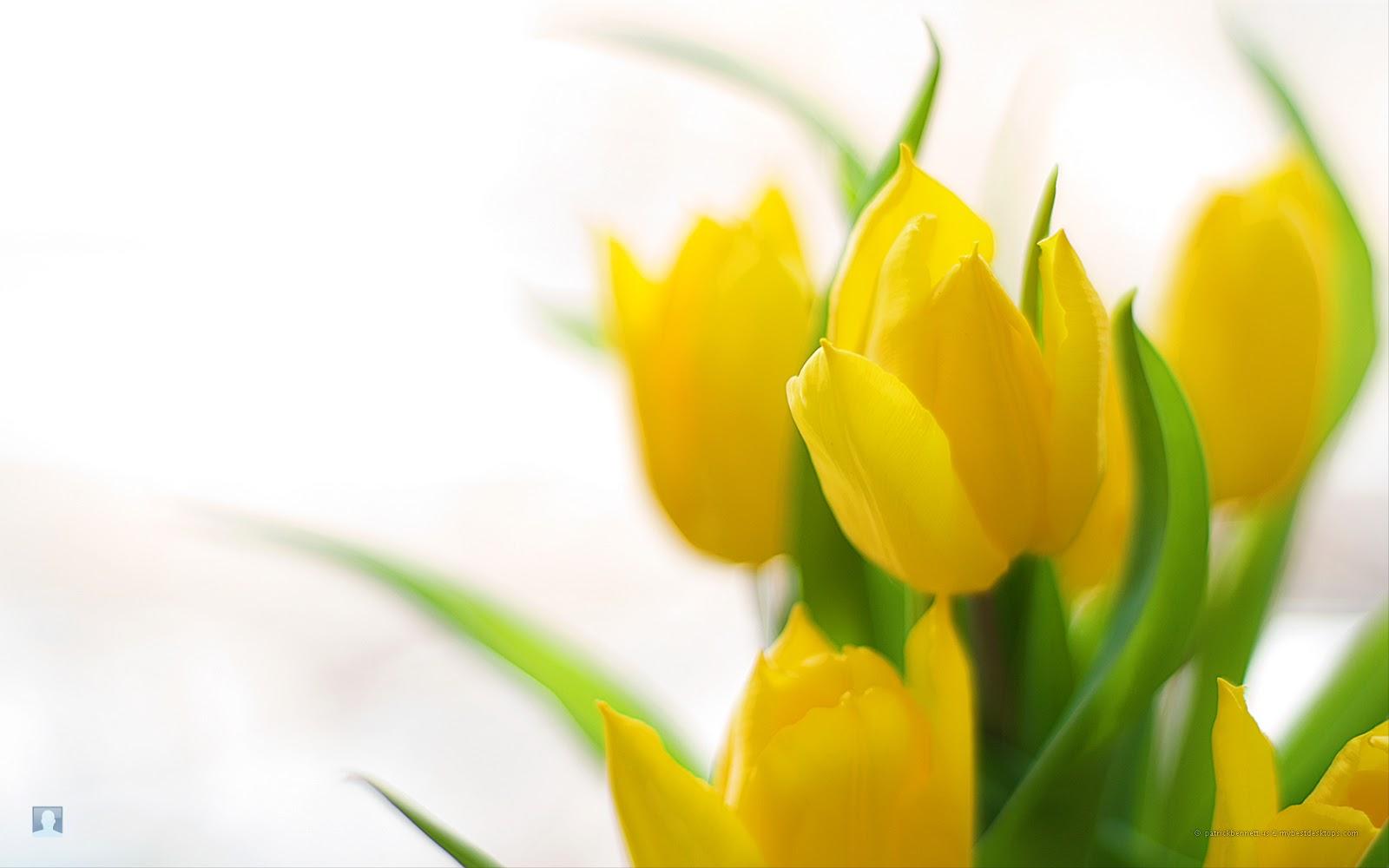 ... /s1600/Free-desktop-wallpapers-blog-archive-spring-flowers-5.jpg