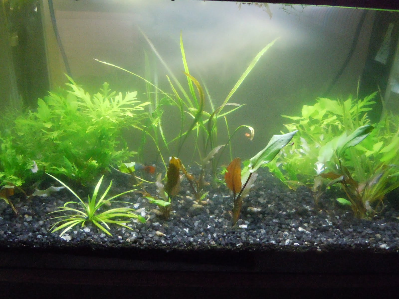 Adventures in aquaculture for Nitrite in fish tank