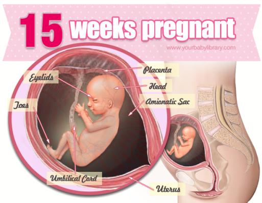 beregn uge gravid
