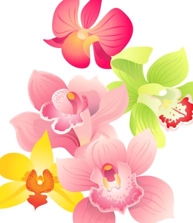 Como cuidar de orquideas phalaenopsis