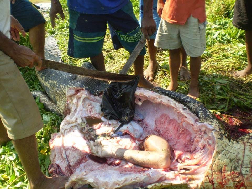 Q Significa Shark Falamazônia: JACA...