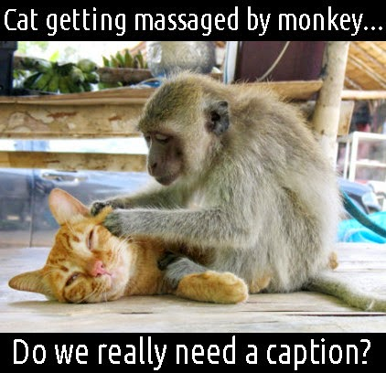 cat getting massage by monkey do i really need a caption MEME the great beyond cat n monkeys stuff