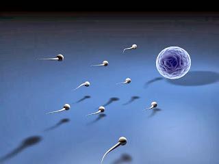 ialah hormon seks laki-laki yang paling penting Penyebab Hormon Testosteron Menurun