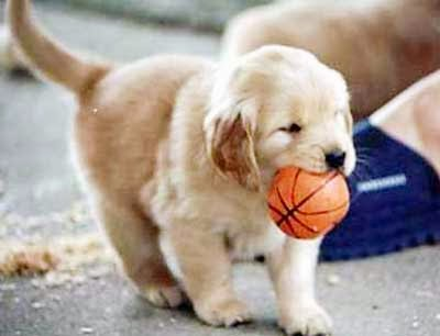 Gunggung Aneka Gambar Lucu Anjing