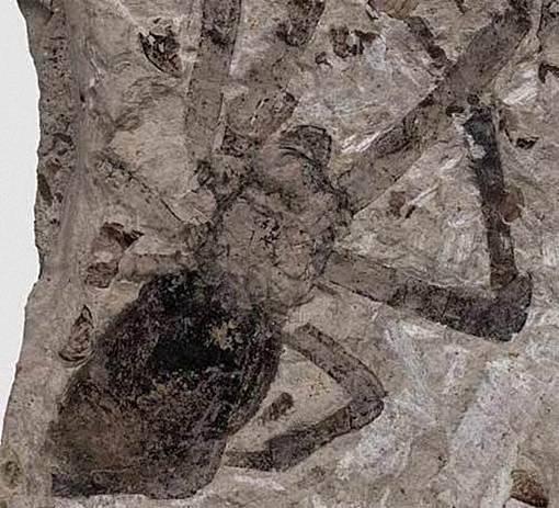 Ilmuwan Temukan Fosil Laba-Laba terbesar - Bisa Memangsa Burung Dan Kelelawar - the facemash post