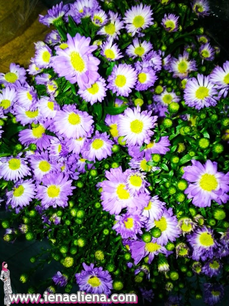 Membeli Bunga Segar - Harga Bunga Segar Naik sebelum GST