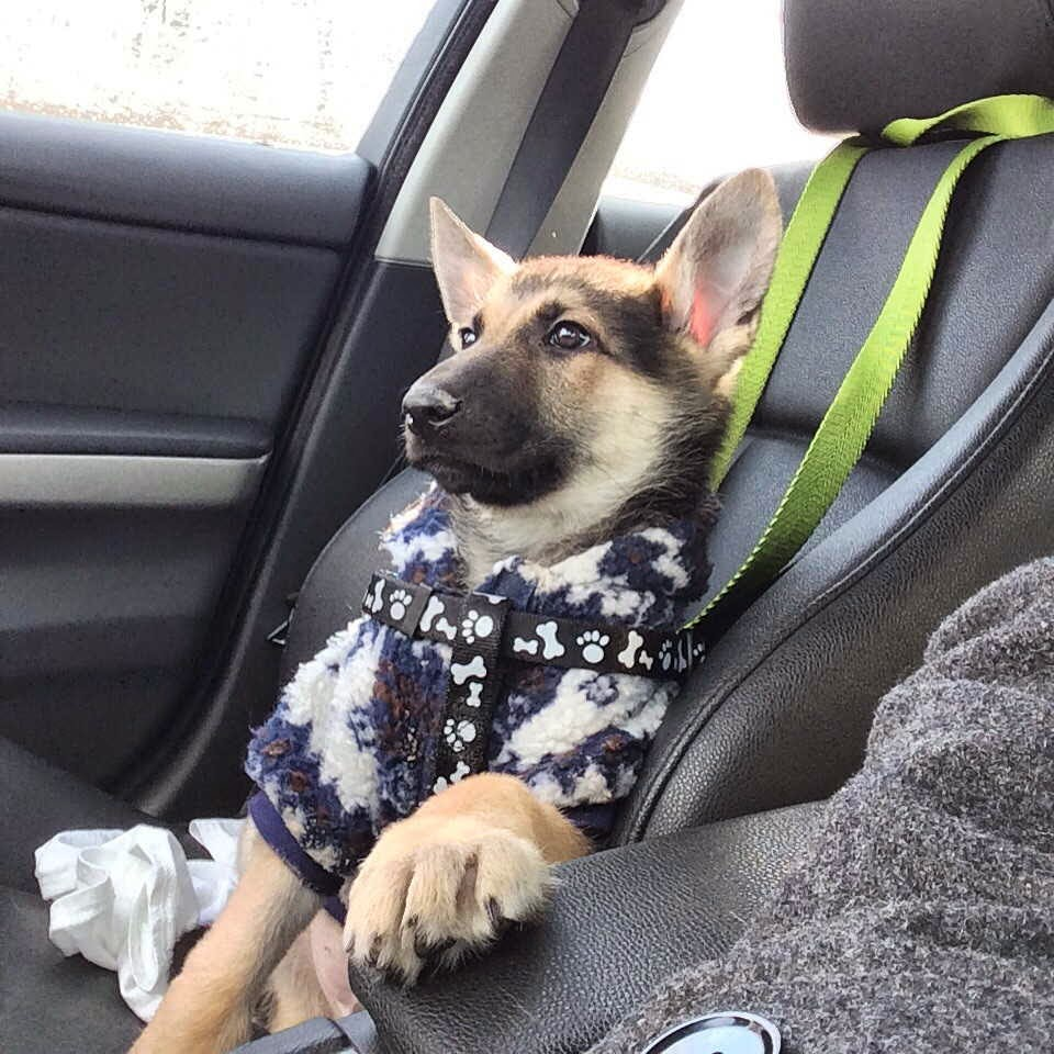 Cute dogs, best dog photo, cute puppy and dog picture
