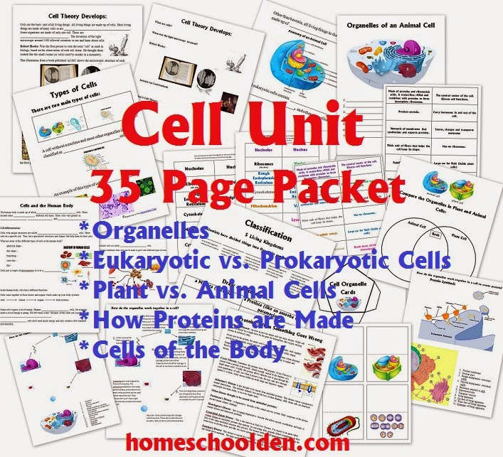A Study of Cells Unit