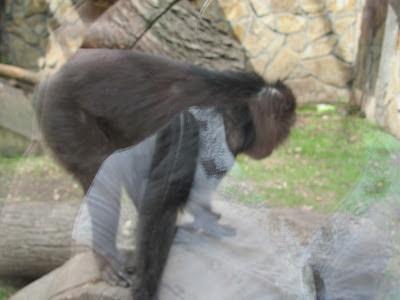 Обезьяны в зоопарке Санкт Петербурга