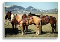horses, dude ranch