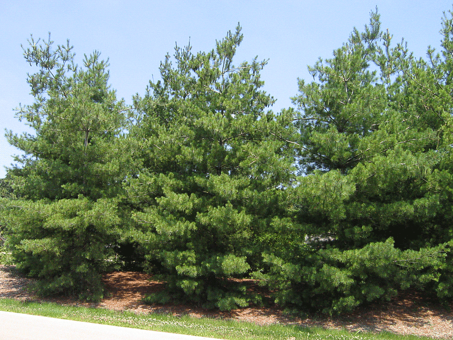 Guernsey soil water conservation district for Pine tree timber