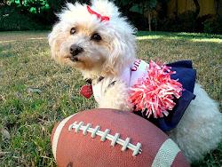 My PupCake Annie