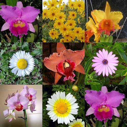 Las rosas orquidias - Clase de flores y sus nombres ...