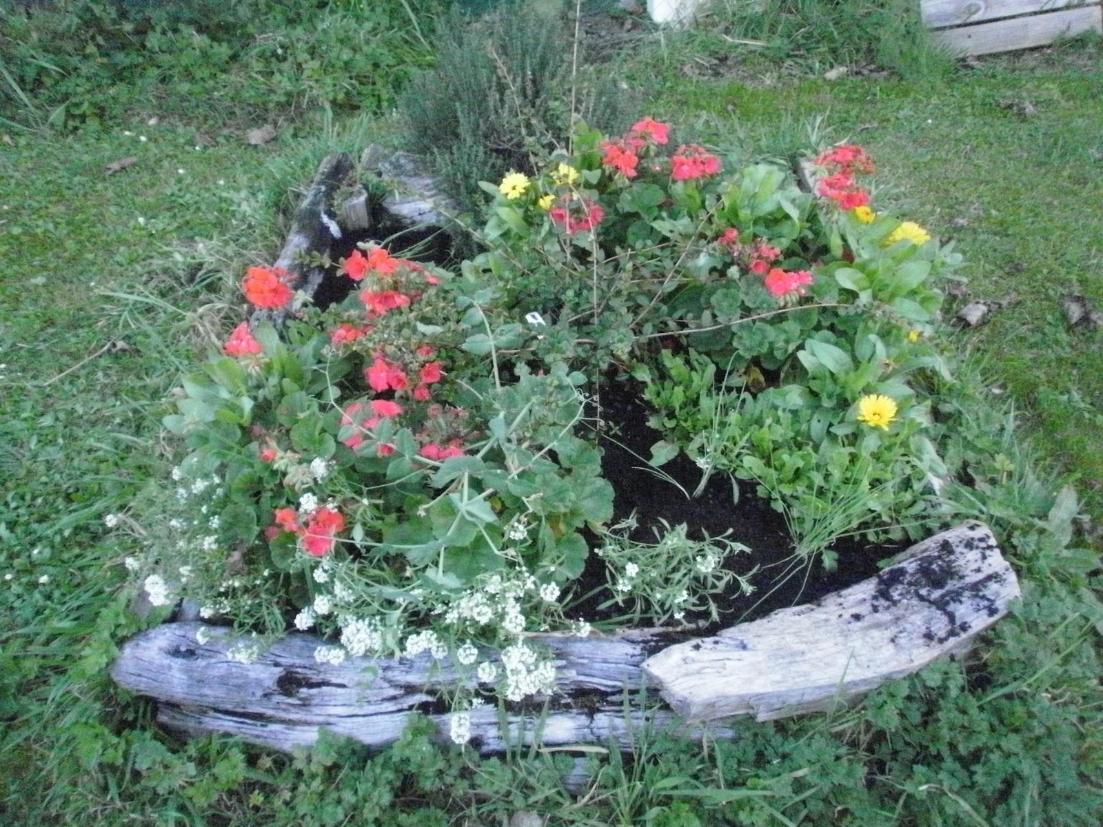 http://2.bp.blogspot.com/-RtBfa-eoj5Q/T5-Tnpkh2mI/AAAAAAAAB_k/UjmweRInhmg/s1600/P4260333.JPG