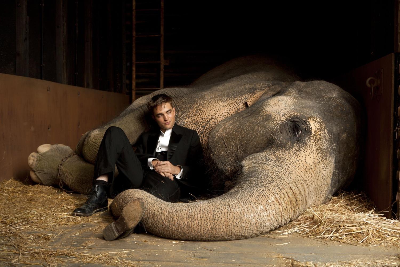 http://2.bp.blogspot.com/-RtGj6287zNQ/TbKINLwpy2I/AAAAAAAAAr8/0O_N1r50qYc/s1600/water+for+elephants.jpg