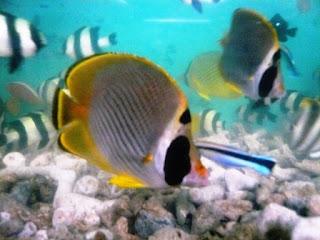Tips Cara Merawat Ikan Hias