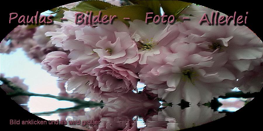 ❈Paulas-Bilder-Foto-Allerlei❈