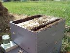 New Hive