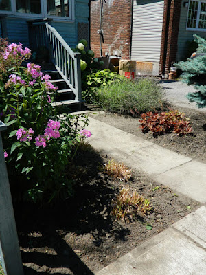 Leslieville Toronto front garden clean up after  Paul Jung Gardening Services
