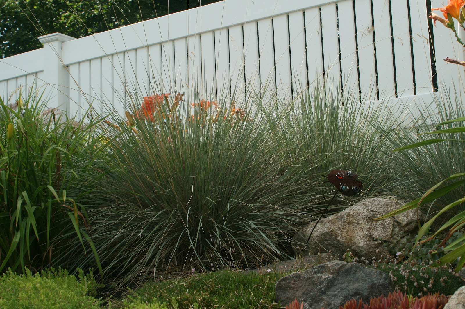 Reed39s Garden Ramblings Designing With Ornamental Grass And Some