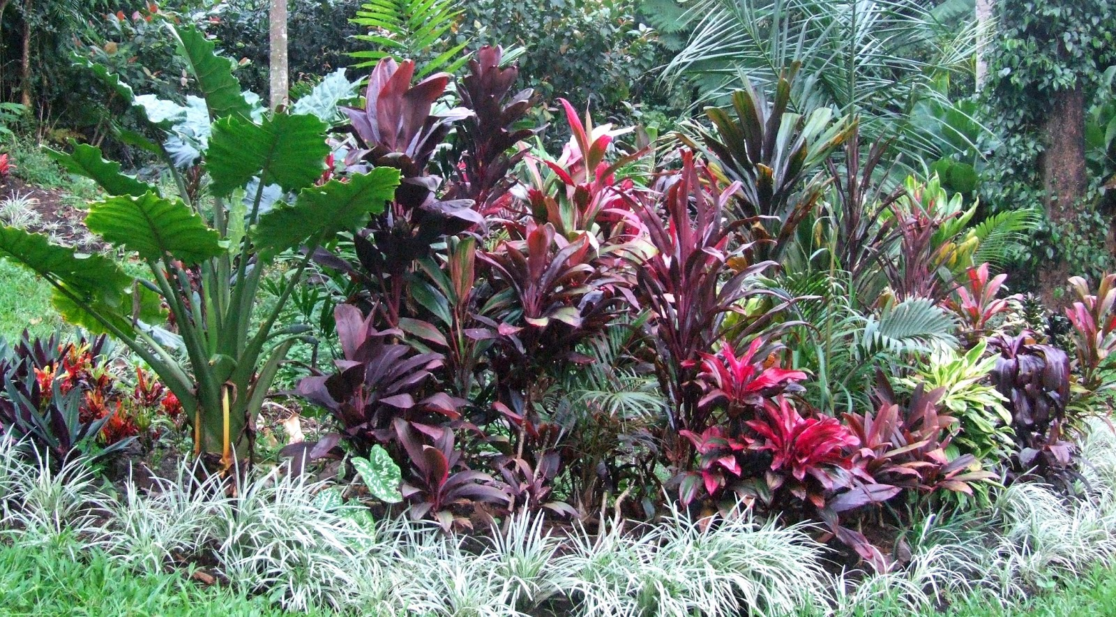 landscaping with tropical plants full sun cordylines, Beautiful flower