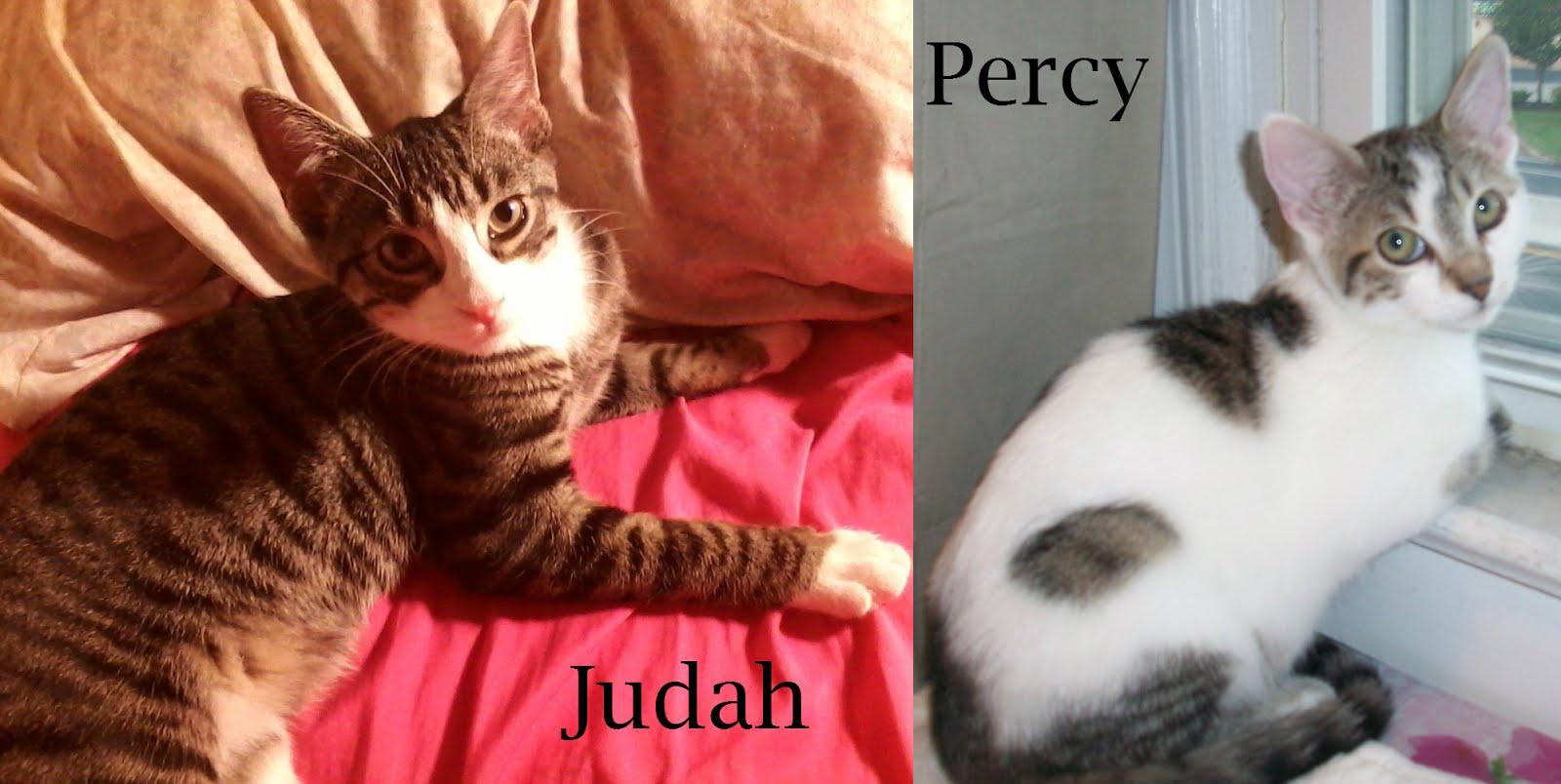 Judah Percy