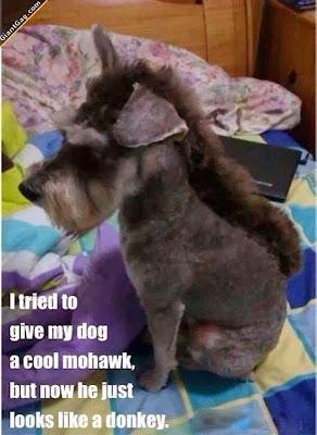 http://2.bp.blogspot.com/-RusyhZIV3Fo/UtyvYb-lyHI/AAAAAAAAC58/_Qk-JnLj73Q/s1600/Mohawk+Dog+Looks+Like+Donkey.jpg
