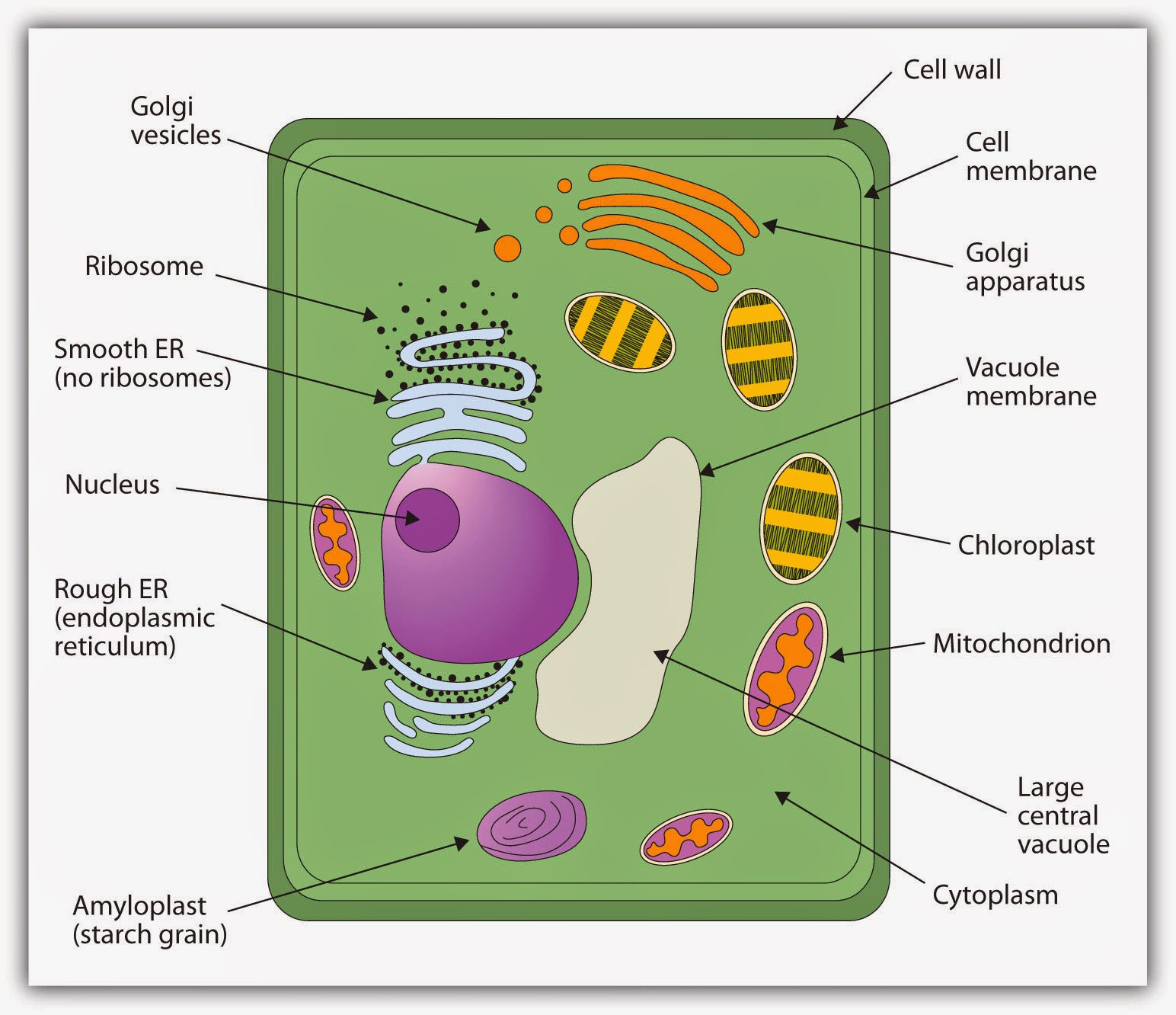 Natasha 06 21 14 Simplebiogasdigesterdiagramjpg In A Plant Cell The Wall Is Outermost Covering Made Up Of Cellulose Which Gives Plants Their Strength