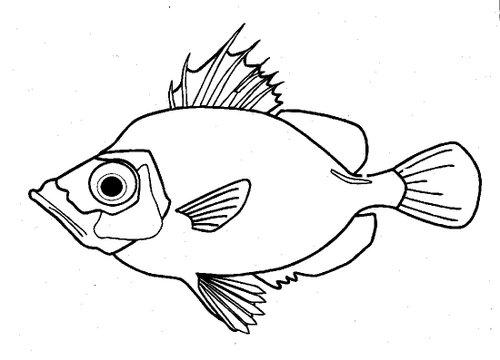 Gambar Haiwan Kartun
