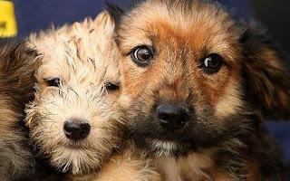 dog training puppy training
