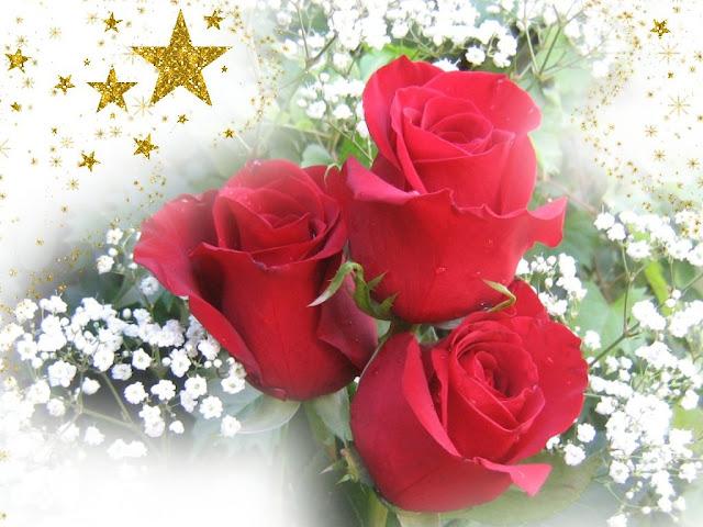 Imagenes de rosa rojas con frase de amor Imágenes  - Imagenes De Rosas Rojas De Buenos Dias