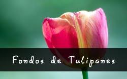 Fondos de Tulipanes
