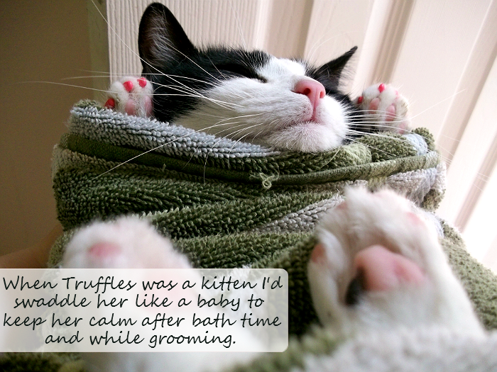 Pink toed kitten Truffles was comforted as a kitten by being swaddled like a human baby. #GoodlifePet #Shop #Cbias