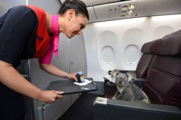 Adoráveis de animais de estimação viajando com seus donos em aviões