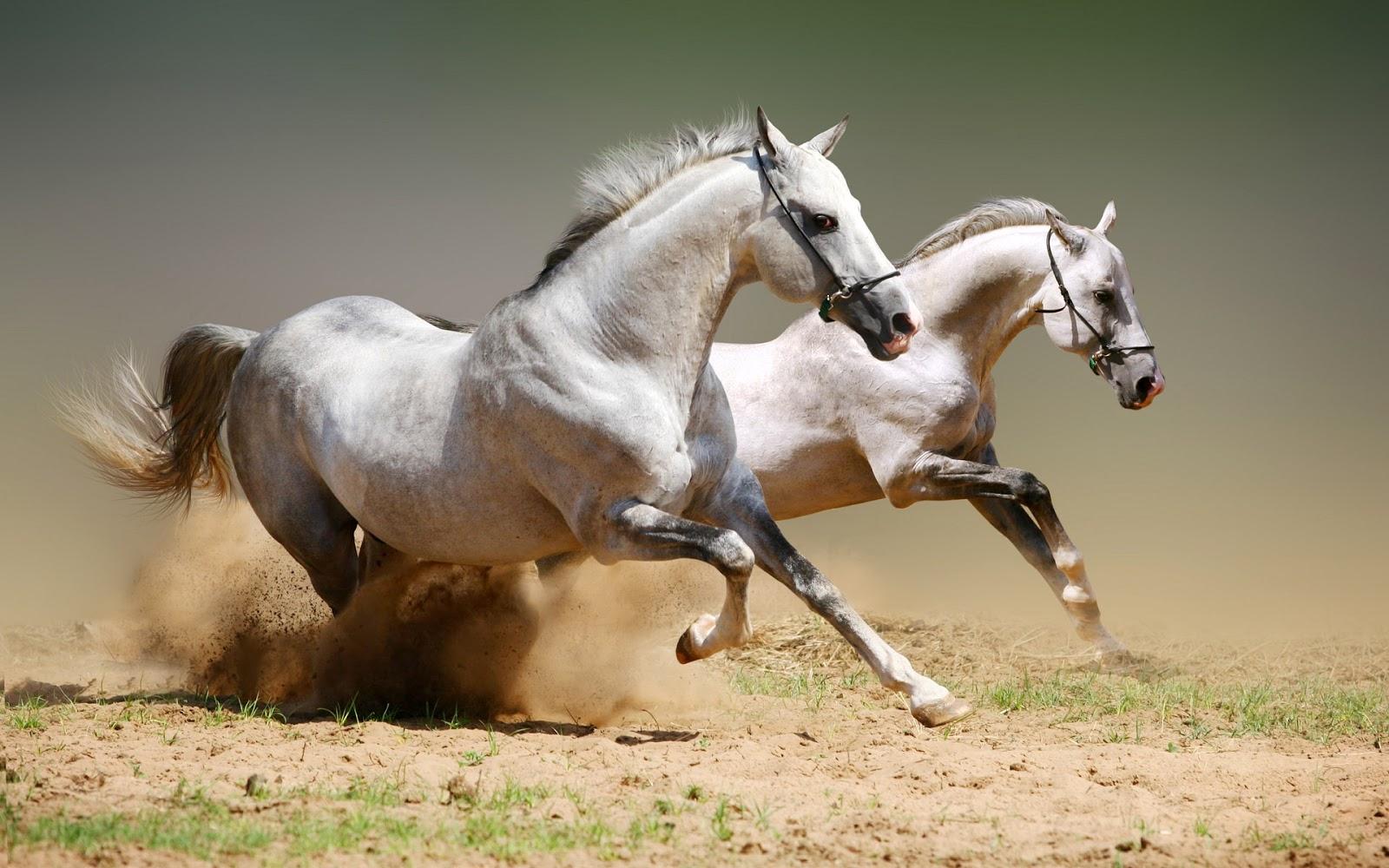 23 Beautiful HD Horse Wallpapers - HDWallSource.com