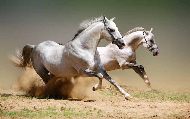 White Horse Running Wallpaper