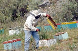 Ταχύρρυθμη εκπαίδευση μελισσοκόμων στο Σουφλί