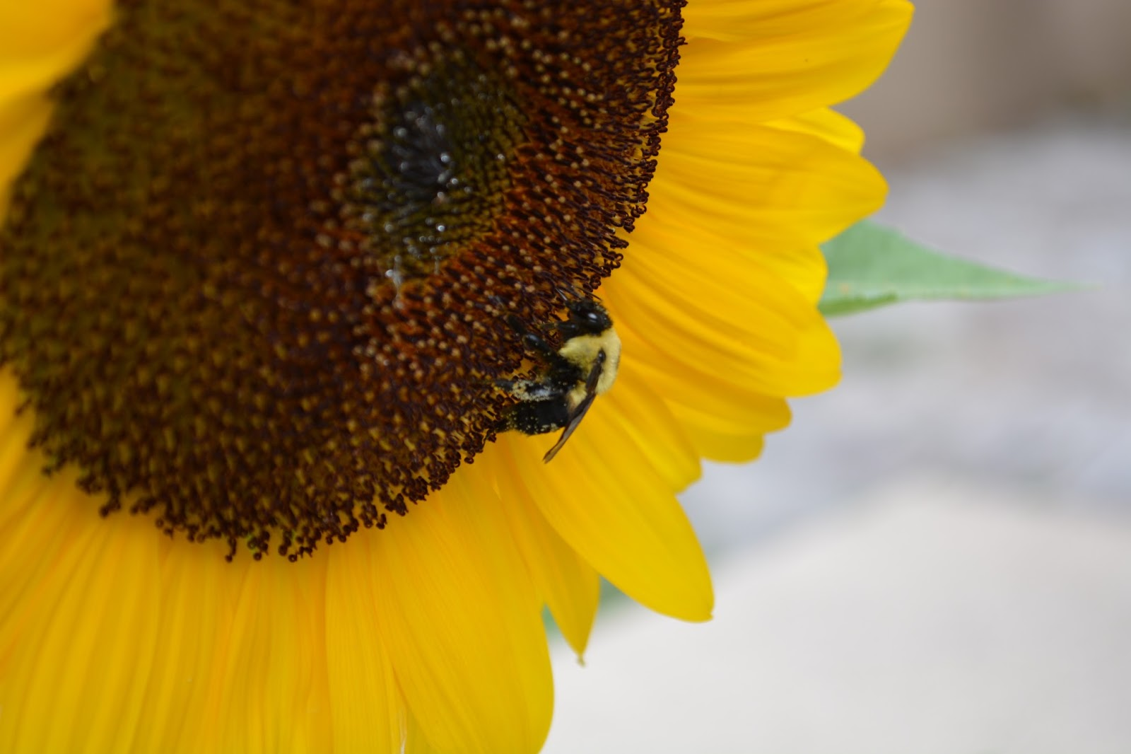 cozy birdhouse | the sunflower and the bee