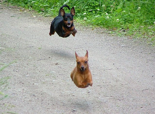 Flughunde als Haustiere