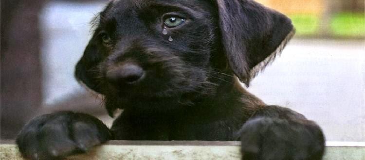 Σε καλά χέρια το σκυλάκι που βασανίστηκε στην Αρτα Νοσηλεύεται σε κρίσιμη κατάσταση