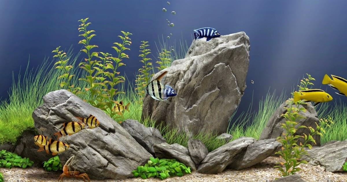 dream_aquarium_serial_number-adds
