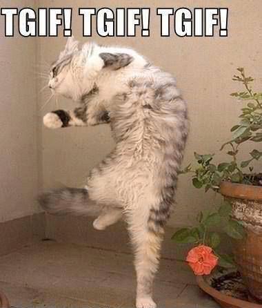 Bildresultat för cats friday