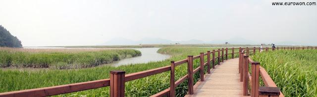 Pasarelas de madera en la Bahía Suncheonman
