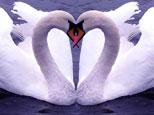 El amor de u