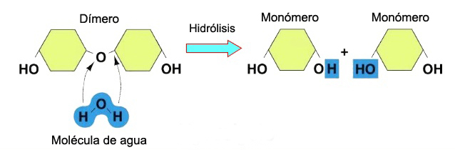 Reacción de hidrólisis
