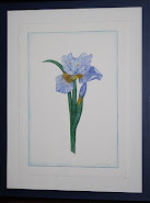 Mon Aquarelle - Iris bleu