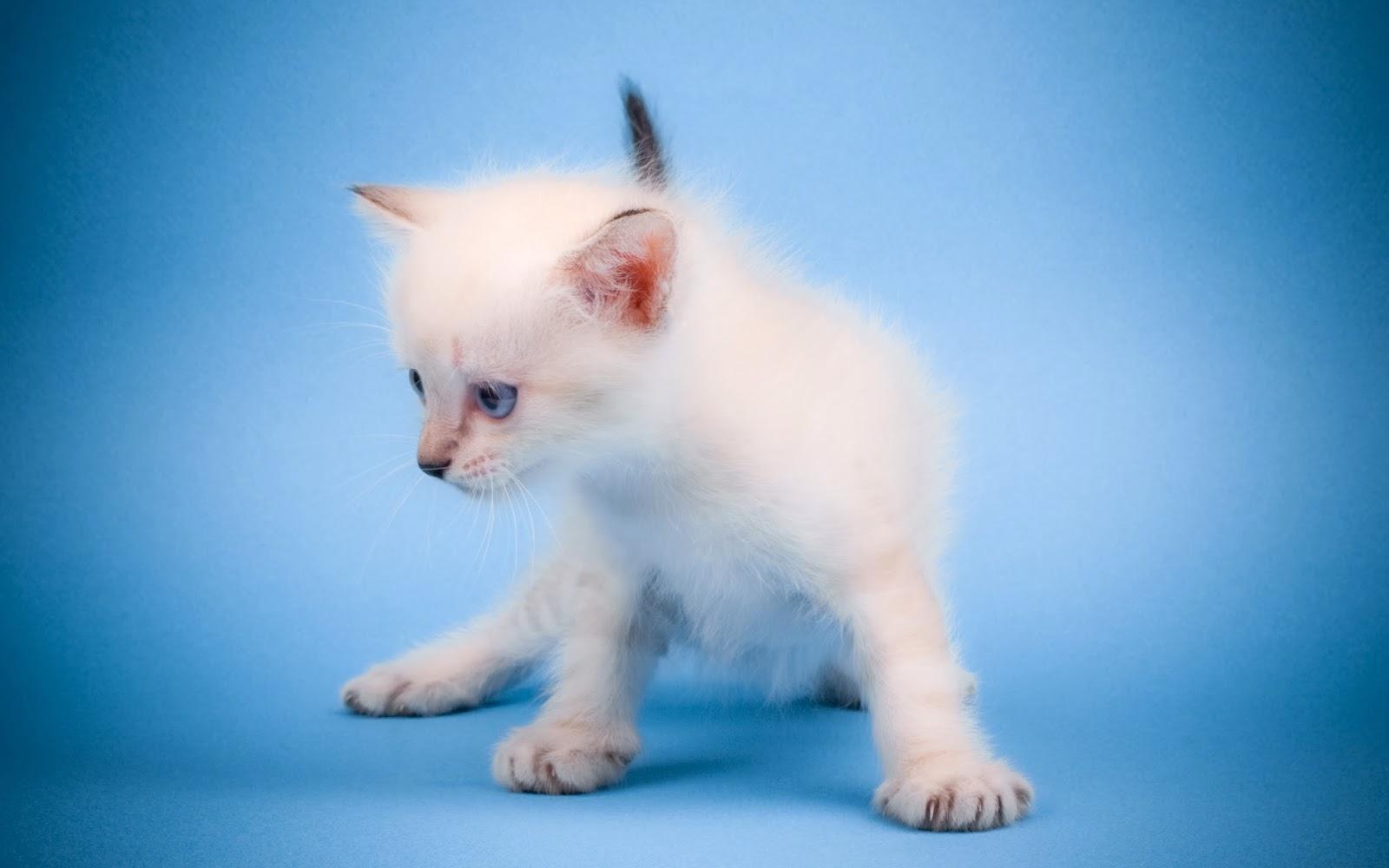 "<img src=""http://2.bp.blogspot.com/-Rx8GCh1eaN4/UuqjpdNWrAI/AAAAAAAAKrM/5eDUEUcW_08/s1600/cute-mew-mew-cat-wallpaper.jpg"" alt=""cute mew mew cat wallpaper"" />"