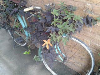 แต่งสวนรอบร้านด้วยจักรยานเก่า
